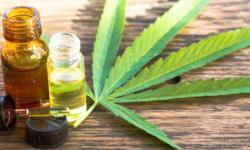 Estudo americano revela que mercado anual de Cannabis na América Latina é de US$ 9,8 bilhões