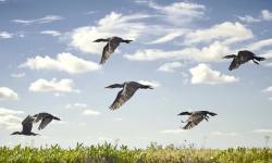 Pantanal Argentino: destino turístico com muita fauna e flora para explorar