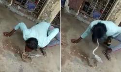 Bêbado tenta beijar cobra mortal e recebe mordida na língua. Veja vídeo