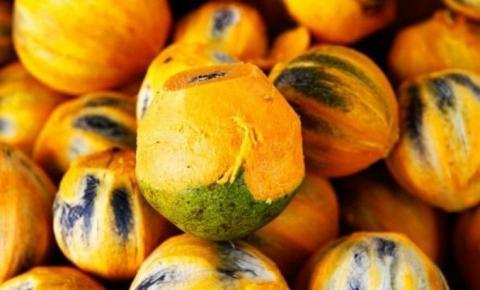 FVS segue investigando causa de doença transmitida pelo tucumã em Manacapuru