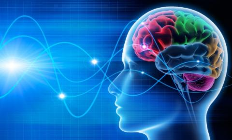 Educadores do Amazonas levam neurociência para sala de aula