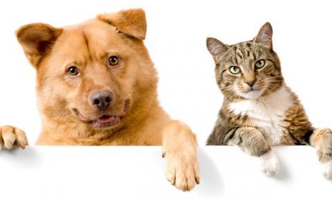 Veja 5 cuidados garantidos para aumentar a expectativa de vida de cães e gatos