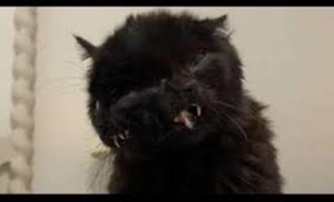 Vídeo: gato com duas faces completa 1 ano de idade