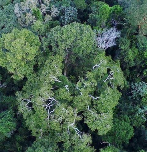 Força-Tarefa da AGU ficará mais um ano atuando em defesa da Amazônia